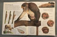 DK Encyclopedia Of Animals (14)