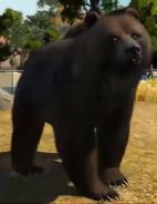 Kodiak-bear-zootycoon3