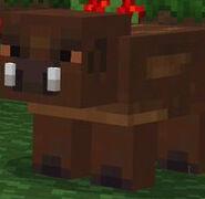MSATP Wild Boar
