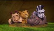 Madagascar A Little Wild Sleeping Zoo Crew