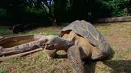 Pittsburgh Zoo Tortoise