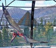 Pteranodon longiceps (Jurassic World Evolution 2)