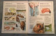 Usborne World Wildlife- Mountain Wildlife (7)