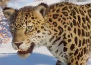 Amur Leopard (Zoo Tycoon Switch)