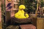 Big Bird talks about taking a nap and doses off