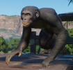 Bonobo (Planet Zoo)