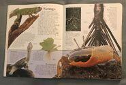DK Encyclopedia Of Animals (28)