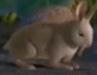 Gon Rabbit