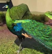 Green-peafowl-zootycoon3