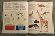 Macmillan Animal Encyclopedia for Children (13)