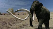 Mammoth, Columbian.jpg