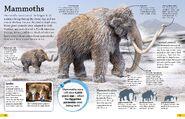 Mammoths Are Extinct Mammals