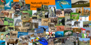 My NatureRules1 Spoof Poster.png