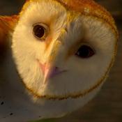 Soren (Legend of the Guardians - The Owls of Ga'Hoole)