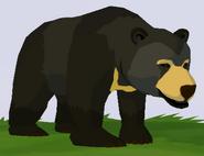 Sun Bear WOZ