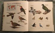 Visual Dictionary of Animals (79)