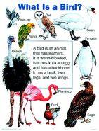Birds (poster)