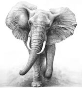C2841f41e7c2a6d83b264e761643d803--drawings-of-elephants-elephant-illustration