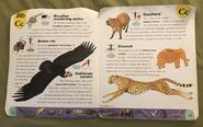 Extreme Animals Dictionary (4)