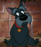 Jock in Lady and the Tramp