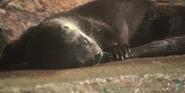 Milwaukee County Zoo Otter