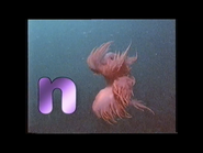 N is for Nudibranch