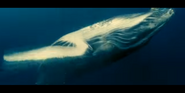 Oceans 2010 Humpback Whale