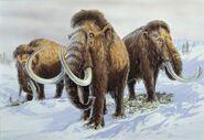 Three Woolly Mammoths