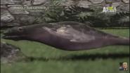 UTAUC Gardener Snake