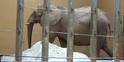 Zoo Anlanta Elephant