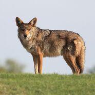 800px-Gpa bill coyote dad 1