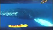 BTJG Whale