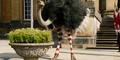 Dolittle Ostrich