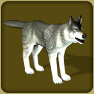 Gray Wolf2 (Blue Fang)