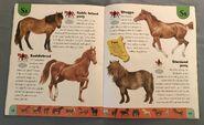 Horse Dictionary (21)