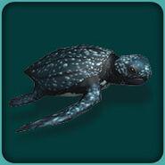 Leatherback Sea Turtle (Blue Fang)