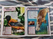 Nature's Deadliest Creatures (35)