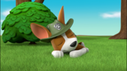 Paw patrol tracker sleeping