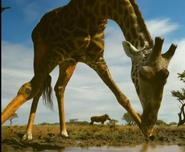 SRNGTI Giraffe