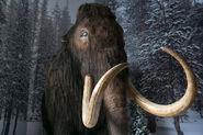Woolly Mammoth Bull