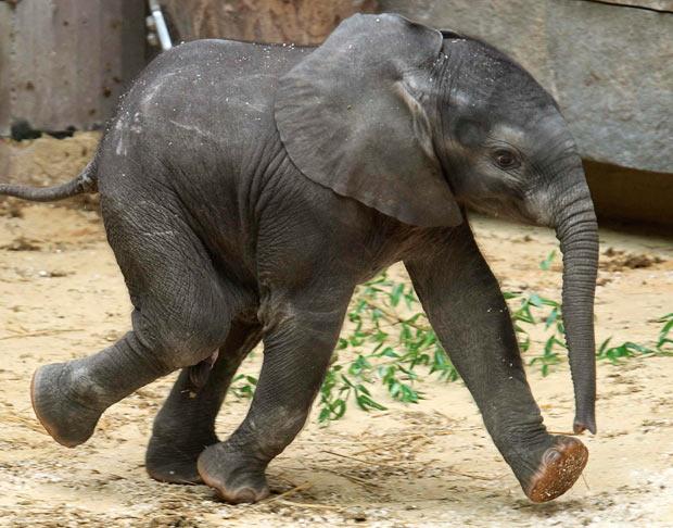 Africa VI: The Secret of Animal Rock