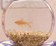 Dorothyfish.jpg