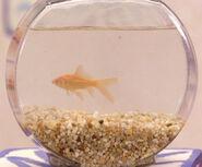 Dorothyfish