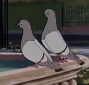 LatT Pigeons