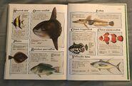 Macmillan Animal Encyclopedia for Children (45)