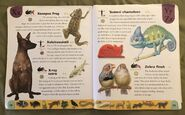 Pet Dictionary (26)