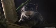 Racine Zoo Emperor Tamarin