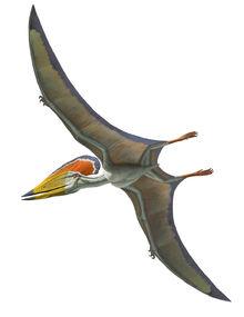 Tupuxuara-pterosaur.jpg
