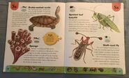 Weird Animals Dictionary (20)