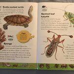Weird Animals Dictionary (20).jpeg